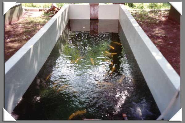 Vasche e piscine lavori eseguiti ristrutturazioni for Piscine per pesci